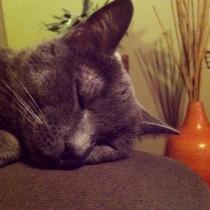 Lazy Cleo.